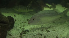 Fish in Aquarium Stock Footage