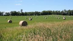 Rural landscape. Hayfield. Stock Footage