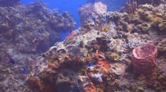 Caribbean coral reef Stock Footage