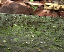 Ants In a Column 01 Stock Footage