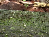 Stock Video Footage of Ants In a Column 01