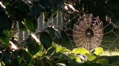 Spider Web In Sunshine - stock footage