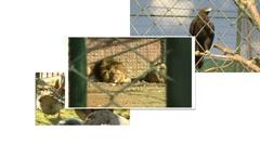 Zoo split screen Stock Footage