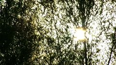 Tree flare sun shine Stock Footage