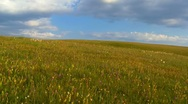Green grass in the field with blue sky in background Stock Footage