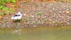 Stock Video Footage of Creek at El Yunque Forest with Duck in riverside