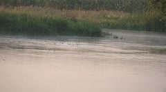 Swallows flying over water - stock footage