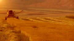 wheat harvesting - stock footage