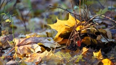 Yellow leaf falling down Stock Footage