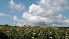 Clouds swirl over a field of blooming Stock Footage
