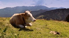 Cattle german alps Stock Footage