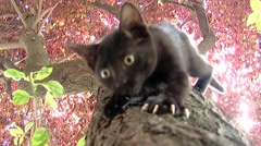 Black cat descends the tree Stock Footage