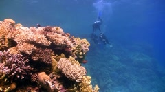 Master diver teaches students to dive, red sea Stock Footage