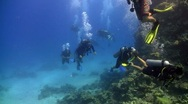 Group of divers swims over coral reefs. Red Sea Stock Footage