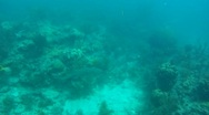 Stock Video Footage of Nurse Shark and Tarpon