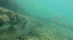 Nurse Shark on Wreck Stock Footage