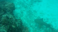 Stock Video Footage of Nurse Shark to Lobster