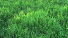 Wind in the Grass Stock Footage