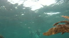 Snorklers on Reef Swimming to Camera Stock Footage