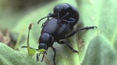 Beetles Stock Footage