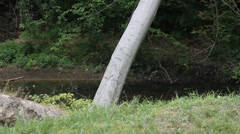 Tree leaning into Creek Stock Footage