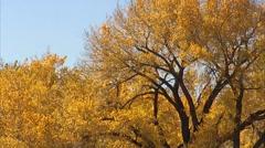 Golden Autumn Tree Leaves Stock Footage