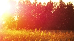 field of grass and sunset - stock footage