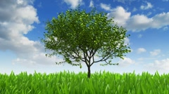 Growing tree - stock footage