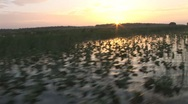 Stock Video Footage of Sunrise Marsh