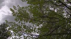 Spring Tree Leaves in Stormy Sky Stock Footage