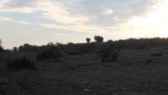 Maasai Man Walking Away in Morning Light   (HD) Stock Footage