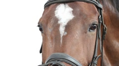 horse face. close-up. - stock footage