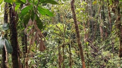 Interior of mossy tropical rainforest, long slow pan Stock Footage