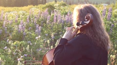 Playing cello with lupines Stock Footage
