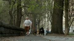 Dog walker, New York City Stock Footage