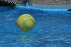 Dolphin kick ball Stock Footage
