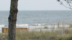Daytime Beach Stock Footage