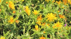 Background with thornes and yellow flowers, Corfu, Greece Stock Footage