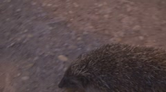 A little scared hedgehog Stock Footage
