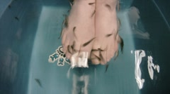 Fish Spa Foot Pedicure Stock Footage
