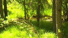 Dolly shot, nature, forest and water, right to left Stock Footage