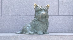 Roosevelt Monument in DC (His Dog) Stock Footage