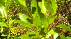 Dolly shot, nature, forest and stream, medium CU, right to left Stock Footage
