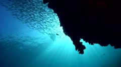 Green sea turtle (Chelonia mydas) silhouette with wall and school of fishes Stock Footage