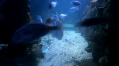 Fish on a seabed - stock footage