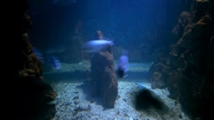 Fish swimming Stock Footage