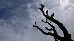 Old tree and clouded sky - stock footage