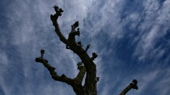 Old tree branches - stock footage