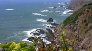 California Pacific Coast  05 Flowers at Rocky Cliff Stock Footage