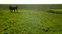 Horse grazing in the meadow Stock Footage